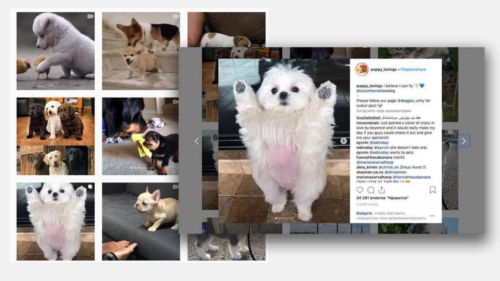 Instagram dog accounts