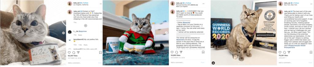 Influencer Marketing Nala Cat